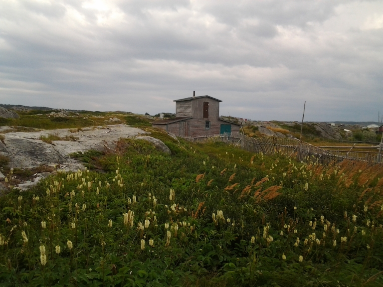 On the path to Oliver's Cove, Fogo Island, NL