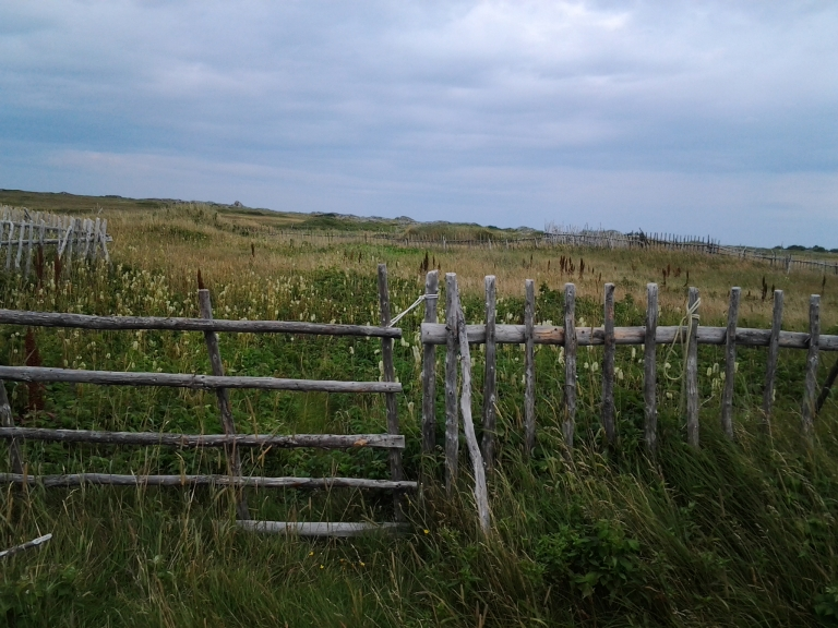 Fenced gardens in abandoned community of Oliver's Cove, Fogo Island, NL