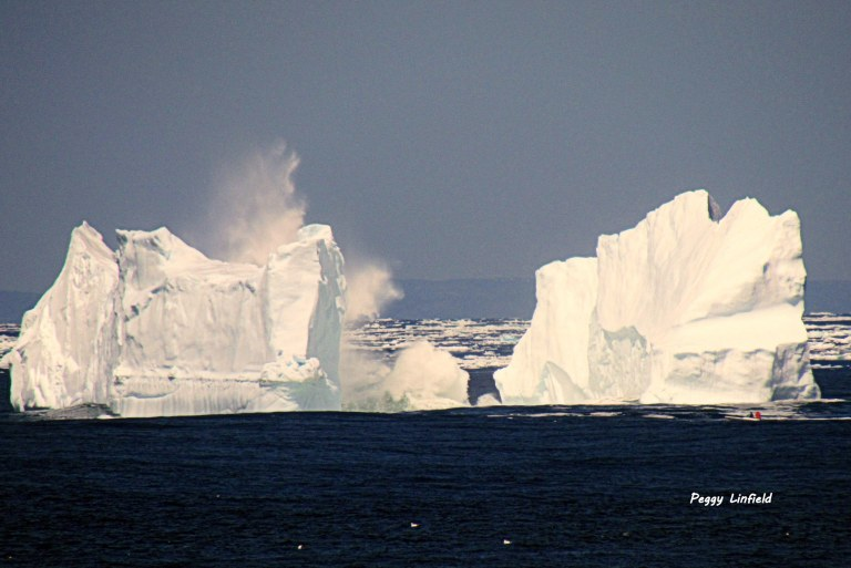 Iceberg in Sleepy Cove, May 2014. Photo by Peggy Linfield and used with permission.
