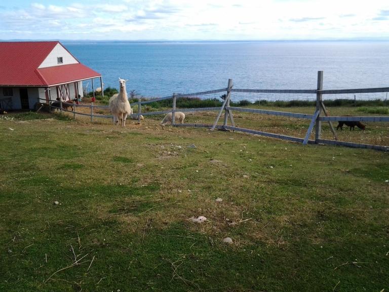 Ocean view at the Alpaca farm.