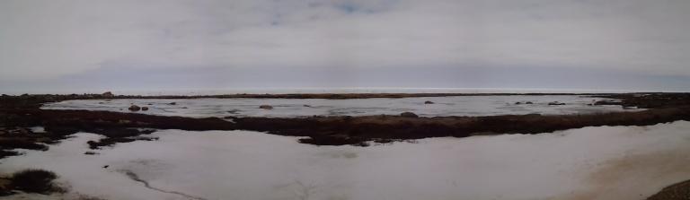 Straight Shore, May 2, 2015 Icebergs on the horizon.